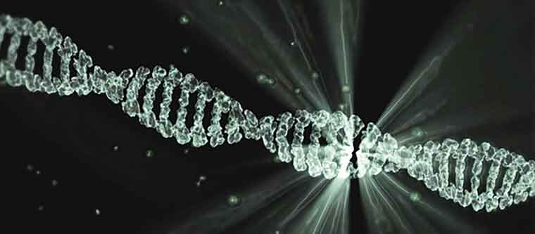 DNA-testing-and-foods